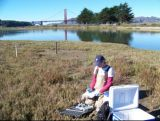 At the foot of San Francisco's historic Presidio, Crissy Marsh consists of a mix of subtidal, intertidal and upland habitats. Photo Credit: Lisamarie Windham-Myers, USGS